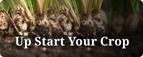 Up Start your crop